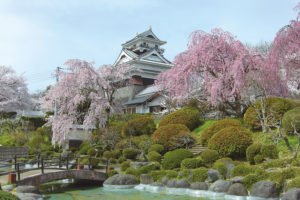 上山市「上山城・ 月岡公園の桜」