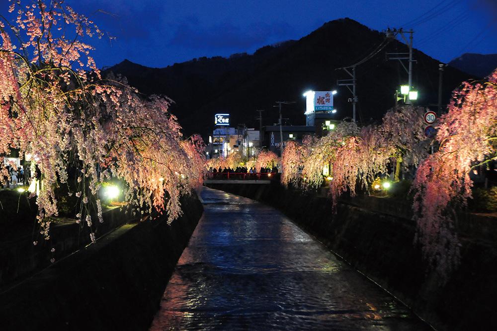 天童市「倉津川しだれ桜」