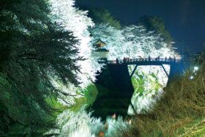 山形市「霞城公園の桜ライトアップ」