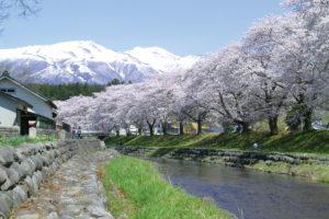 遊佐町「中川河川の桜」