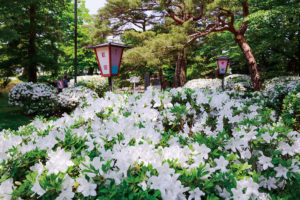 長井市「白つつじ祭り」