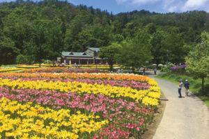 飯豊町「いいでどんでん平 ゆり園ゆりまつり」