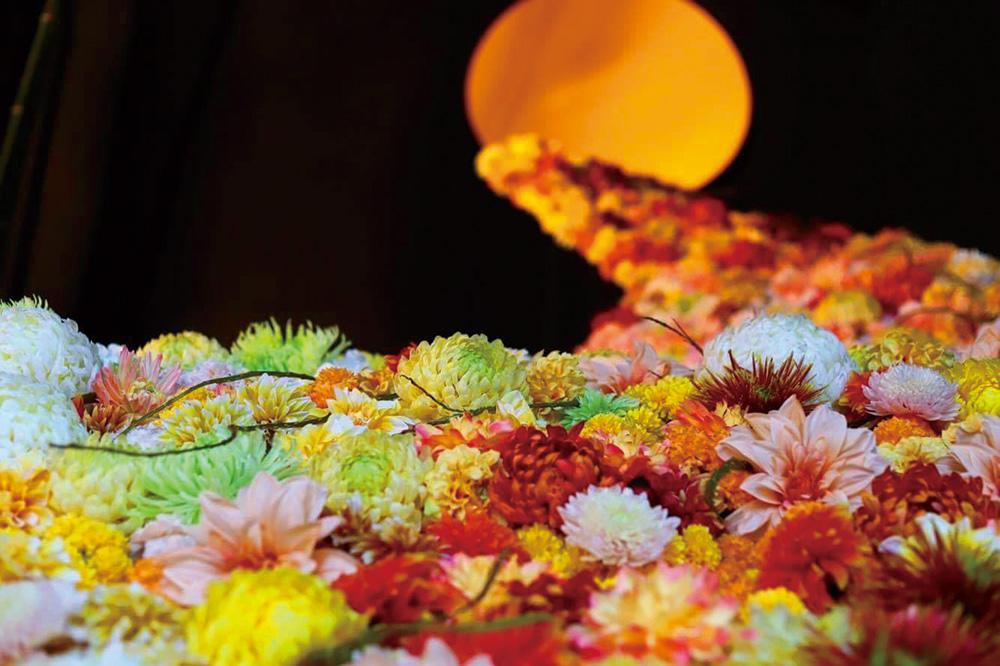 第107回 南陽の菊まつり