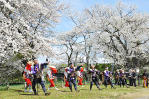 中山町「お達磨の桜」